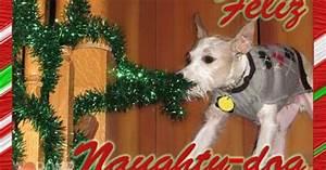 funny dog Christmas Card ideas Archives ROMP Italian