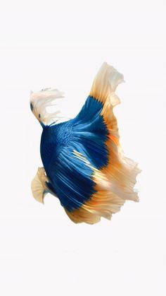 Iphone 7 Live Wallpaper Not Animating - apple ios9 fish live background blue iphone 6