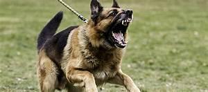 Dog Attacks - Mosman Council Dog Bites