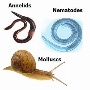 # 7 Other groups of invertebrates   Biology Notes for ...