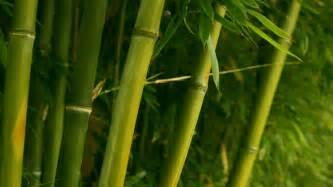 bamboo wallpaper hd pixelstalk net