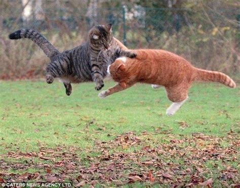 funny cats fighting funny animals