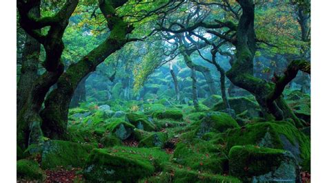 green stones  forest landscape wallpapers