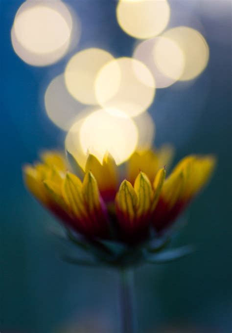 creative macro photography  fairy lights