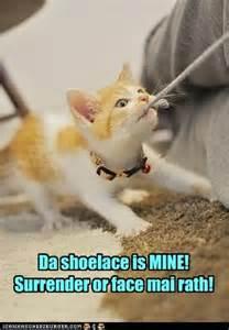 Cute Cat Humor