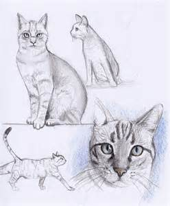 cat sketches cat drawing cats picture