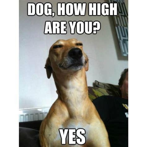 dog memes  honor  todays holiday barkpost