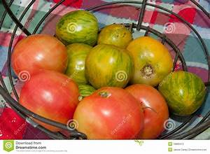 Heirloom Green And Red Tomatoes Stock Photography - Image ...