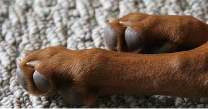 Paw Perros Patas Para Ink Dog Dogs