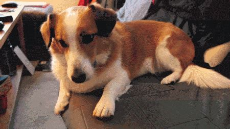 happy dog gif find share  giphy