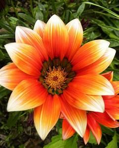 Summer Flower: Orange Summer Flowers
