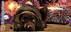 Pyrotechnic panic: Fireworks blamed for 23 dogs ending up ...