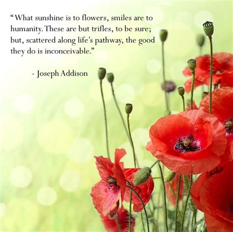 happiness quote smiles poppy flowers poppies love