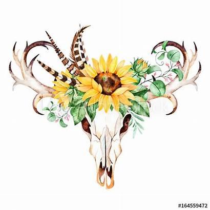 Skull Bull Watercolor Head Sunflowers Boho Feathers
