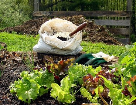 How To Backyard Compost by Top 10 Things To About Home Composting