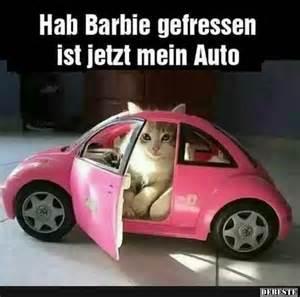 sprüche neues auto über 1 000 ideen zu lustige tierbilder auf lustige katzen lustige bilder und