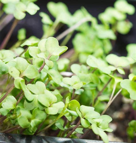 best grow lights for seedlings top 28 seedling grow lights grow light shelving for