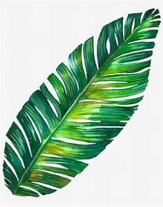 Leaf Png Tumblr - Banana Leaf Tumblr Png