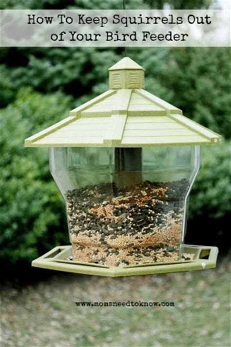 how to keep squirrels out of your bird feeders