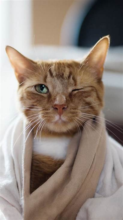 Cat Iphone Funny Animals Eye Closed Animal