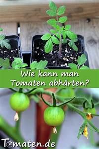 Wann Kann Man Rhabarber Ernten : rausstellen ab wann wie kann man tomatenpflanzen abh rten tomaten pflanzen tomatenanbau ~ A.2002-acura-tl-radio.info Haus und Dekorationen