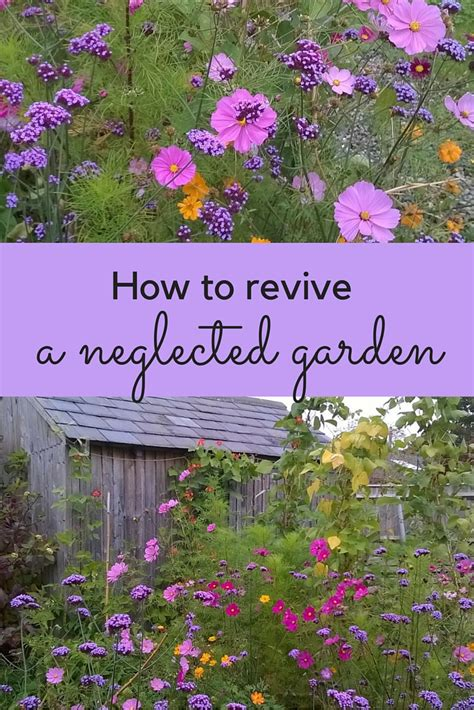 revive gardens how to revive your garden the middle sized garden gardening blog