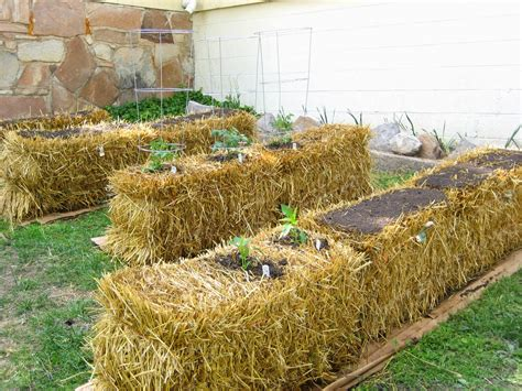hay bale gardening growing the seeds of a guide to straw bale gardening