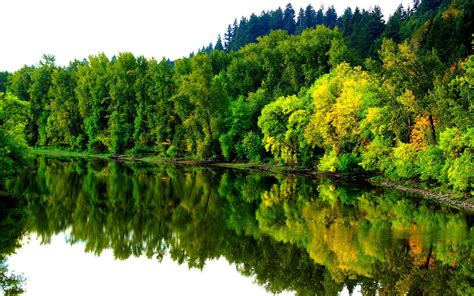 river  autumn coast forest trees reflection  water
