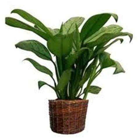 plante de bureau feng shui l 39 utilité des plantes en feng shui fengshuiharmonie