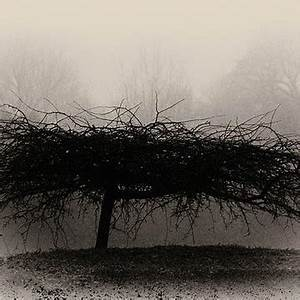 Tony Grider Artwork Collection Middlethorpe Tree in Fog