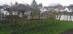 Pfel Spalierobst Erneuern Garten Gartenforumde