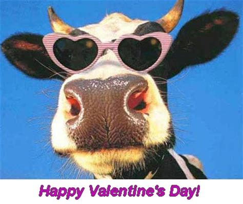 Funny Valentine Day Cow