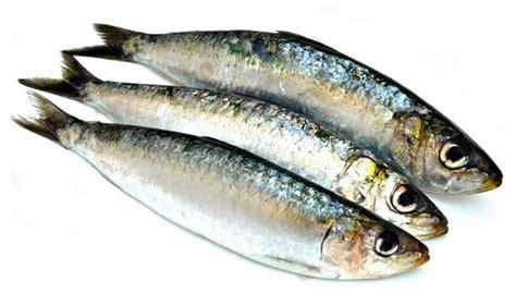 comment cuisiner des sardines sardines à la poêle recette facile et temps de cuisson