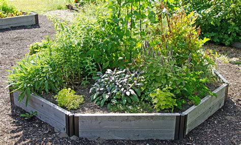 herb garden growing herbs gardeners supply
