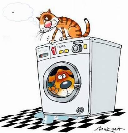 Lessive Humour Gatos Machine Tchounette Divers Humor