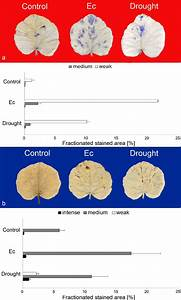 Histochemical Detection Of Ros In Pumpkin Leaves  Images