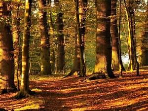 Bilder Vom Wald : forschungsquartett wald macht das gehirn ges nder f r k rper und geist ~ Yasmunasinghe.com Haus und Dekorationen