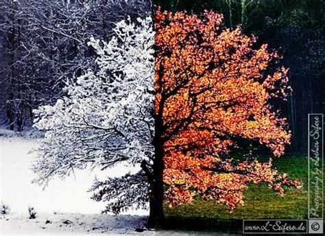 Im Herbst Und Winter herbst und winter bilder einer eiche w 228 hrend der