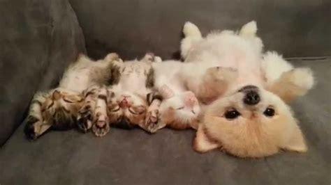 cute dog    cutest dogs