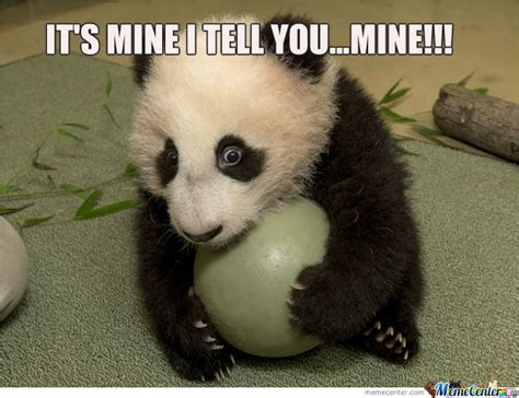 Meme Panda - the gallery for gt panda memes