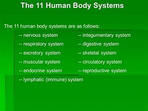 How Many Human Body Systems Are There