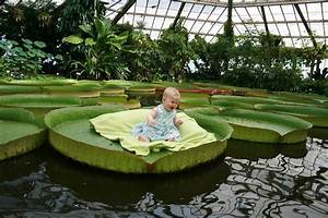 Baby On A Giant Water Lily Leaf