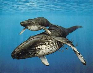 LIFE IN THE SECOND HALF: A Baby Humpback Story
