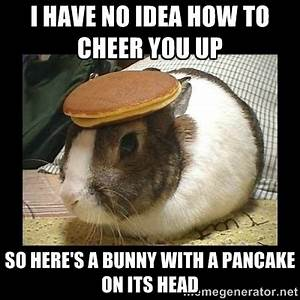 Bunny with Pancake on Head - I have no idea how to cheer ...