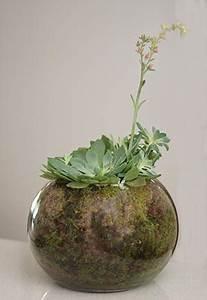 Sphagnum Moss - Nurseries Online