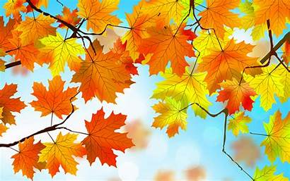 Leaves Autumn Resolution Wallpapers 4k Backgrounds Author