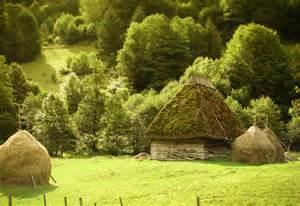 Romania Transylvania Forest