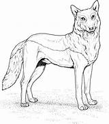 Wolf Coloring Pages Printable Wolves Realistic Drawing Animals Colouring Howling Animal Standing Adults Getdrawings Sketch Template Main Draw Games Pack sketch template