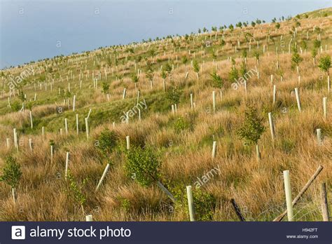 planted trees stock  planted trees stock images