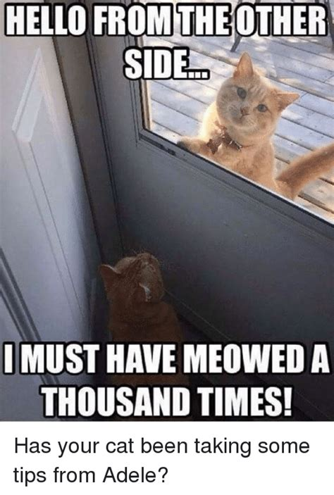 Must Have Memes - hello from the other side must have meowed a thousand times has your cat been taking some tips